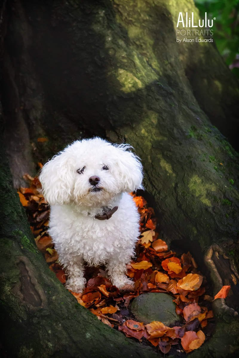 dog sitting in autumn leaves